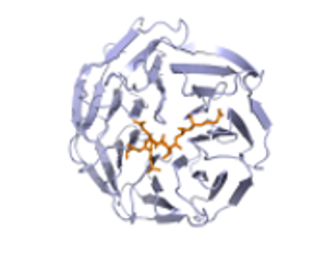 protein image1